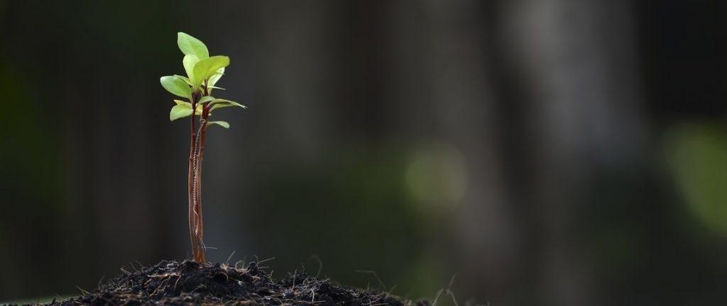 prevención de sismos planta