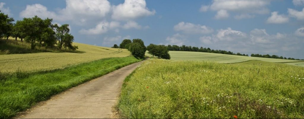 Landscape with grass, trees and a path or rural road