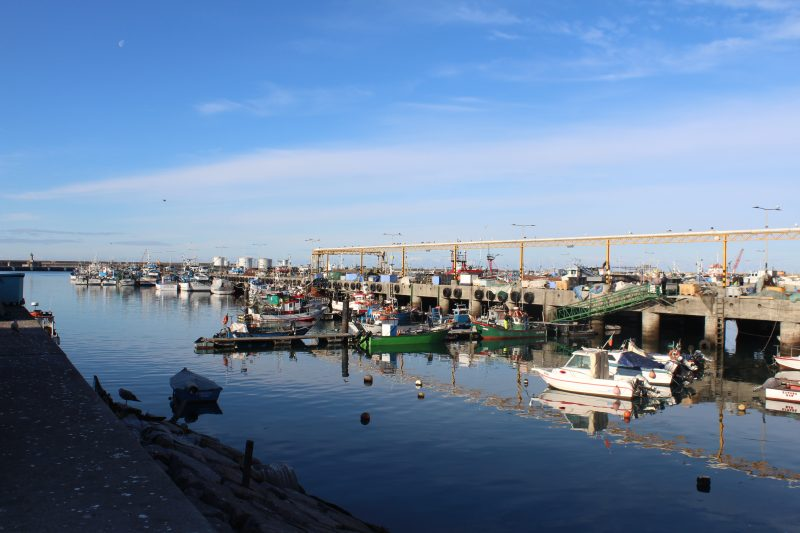 cleaning and waste management services in the fishing port of Matosinhos