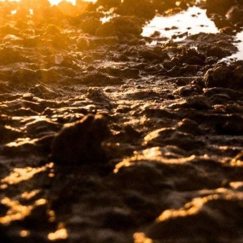 Fango para valorizar mediante mediante carbonatación hidrotermal